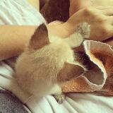 catsusedtofly