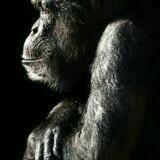 orangutan_sg