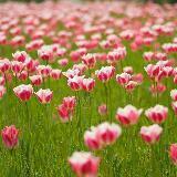 meadow_meadow