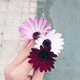 ungu_syafiqah