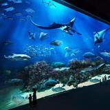 singapore_attraction
