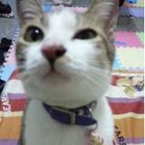 catcute88