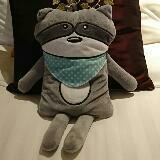 raccoon2016
