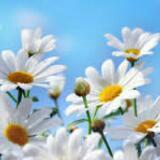 daisysshop