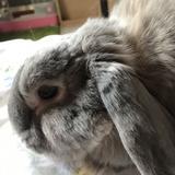 bunnycowcow