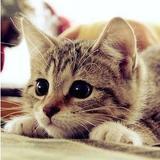 mustardcat