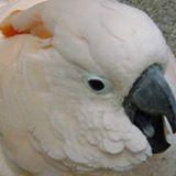 parrotfung