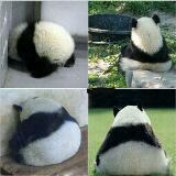panda_van0102