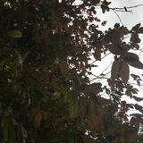 leaves_05