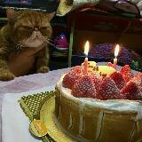 kittylaw1210