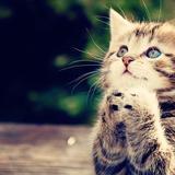 some_cat