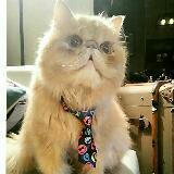harvard_cat