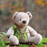 teddygarage
