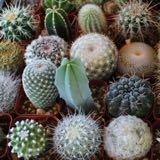 transparentcactus