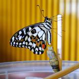 butterbutterfly