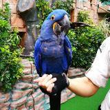 parrotbibi