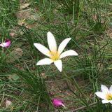 flowerlandshop