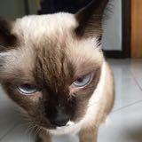 catloverxd