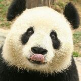 panda211