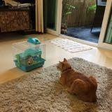 catty1