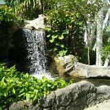 jojo_garden