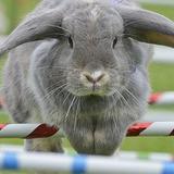 bouncing.bunnies