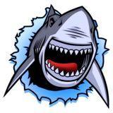 mr.shark