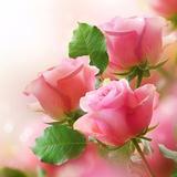 rose.botique