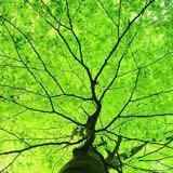 naturepeace