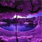 purple_luv