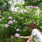 lavenderling