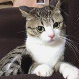 __catlover