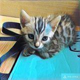 killer_paws