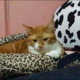 yellowcatcat