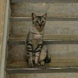 catinsocks