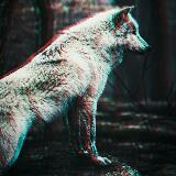 _shadowwolf_