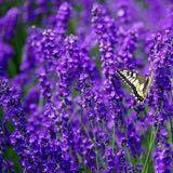 purplist