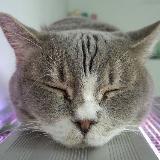 winwin_cat