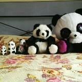 panda_panda_panda117