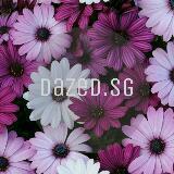 dazed.sg