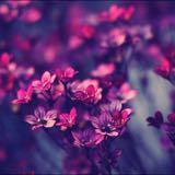 purplesecret