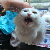 meowwwwwxxxxx