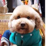 dog20121230