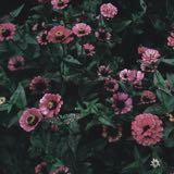 florajan