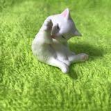 midori_meow