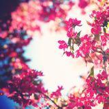 bloomingstore