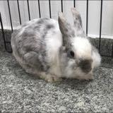wabbits.