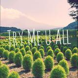 trymeuall