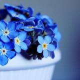 flora.flower