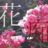flowerholic